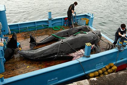 Японцы убили 177 китов во имя науки