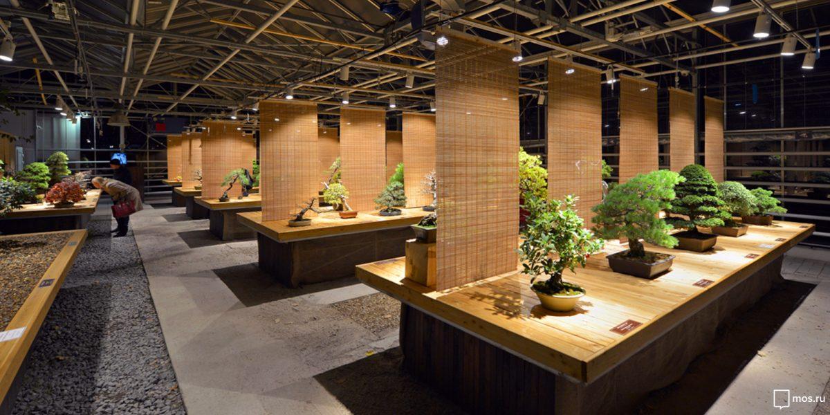 Вековые сливы, буки и клены: в «Аптекарском огороде» покажут деревья бонсай