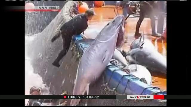 Увеличена квота вылова атлантического голубого тунца