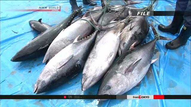 Япония усиливает охрану ресурсов голубого тунца в Тихом океане