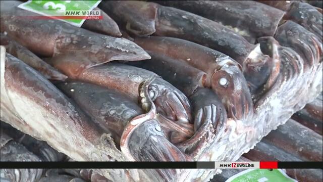 Уровень улова кальмара сокращается в условиях браконьерства северокорейских судов