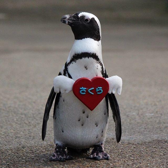 Пингвины в Японии продемонстрируют традицию первого посещения синтоистского храма в новом году