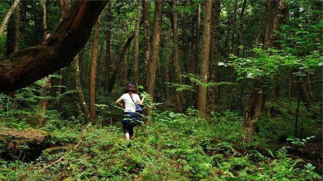 Почему японцев тянет в лес самоубийств Аокигахара