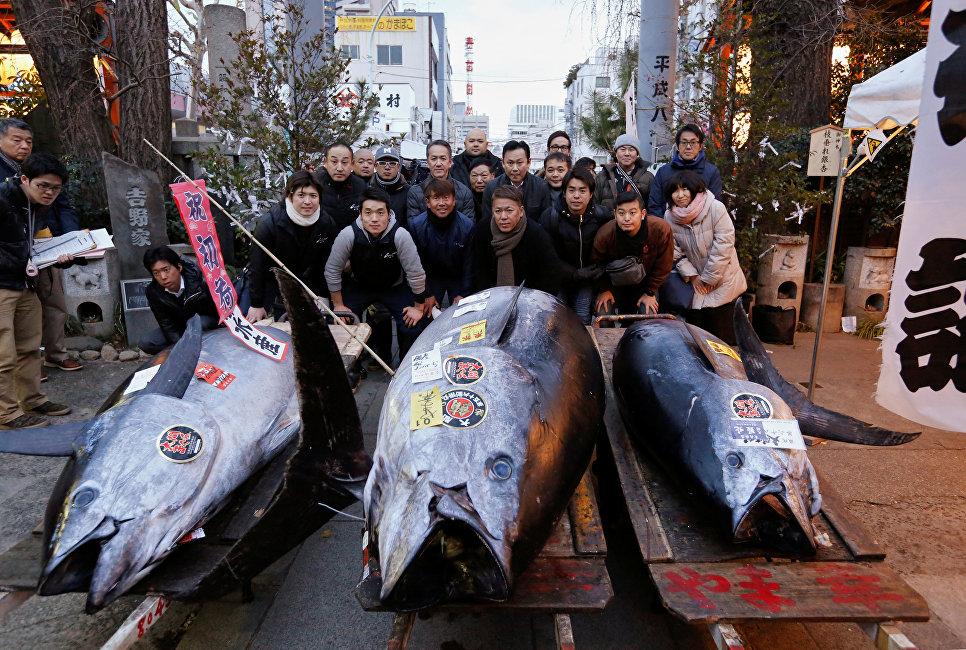Голубого тунца продали за 323 тысячи долларов на аукционе в Токио