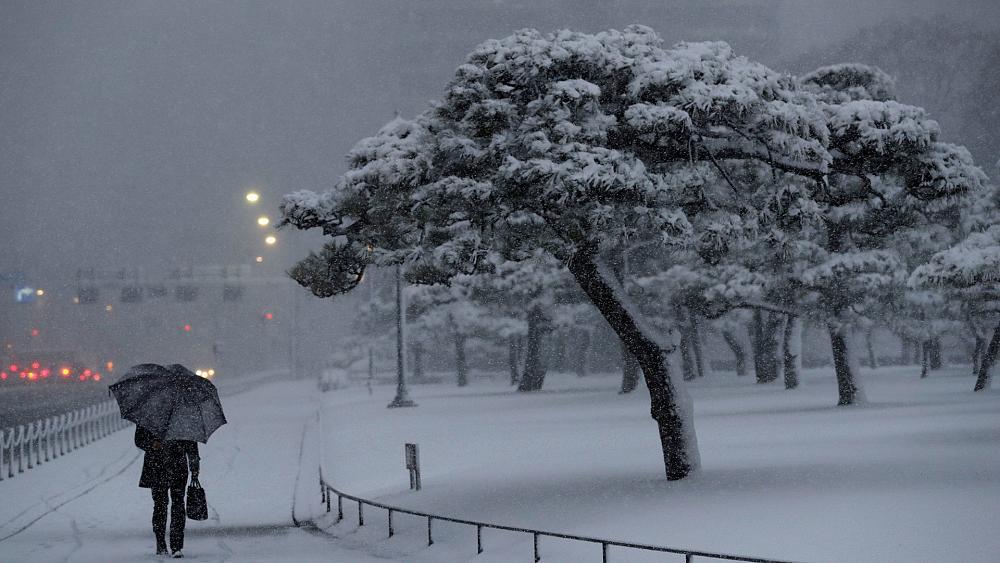 Токио завалило снегом (видео)