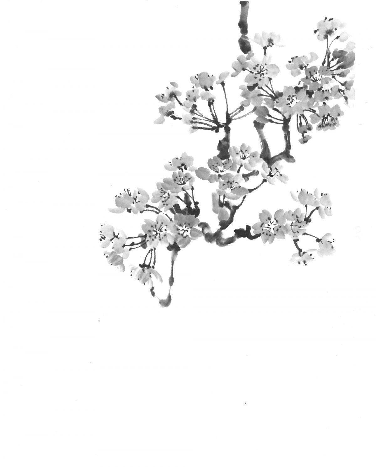 Анонс выставки японских искусств «И сакура в цвету!»
