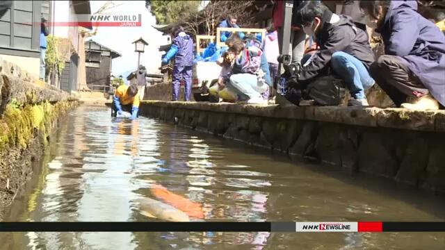 Жители префектуры Гифу в центральной Японии выпустили в канал декоративных карпов перед стартом туристического сезона