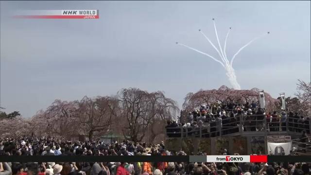 В парке города Хиросаки на севере Японии проходит фестиваль цветущей сакуры