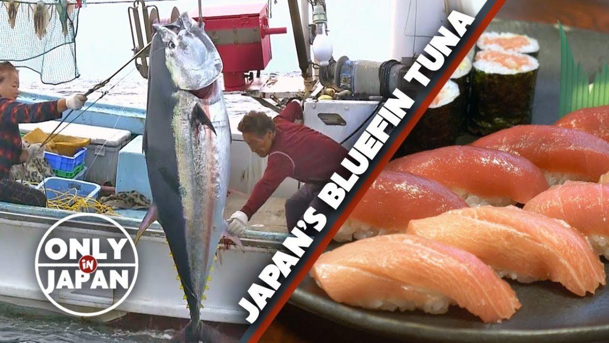 Японское рыболовное ведомство пытается ограничить лов голубого тунца