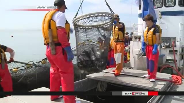 Сезон лова лососевых открылся на Хоккайдо
