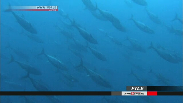 Конференция по ресурсам голубого тихоокеанского тунца завершилась без согласия сторон