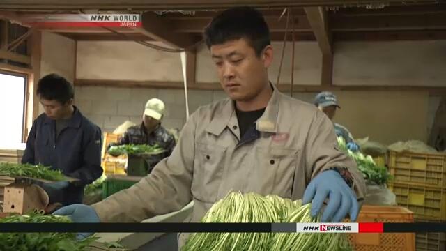 Правительство Японии одобрило законопроект для принятия большего числа иностранных работников