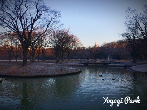 В токийском парке Ёёги впервые проходит Российский фестиваль