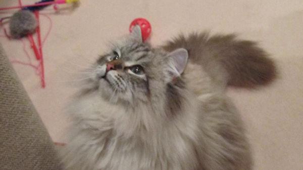 Губернатор японской префектуры рассказал о подаренном Путиным коте