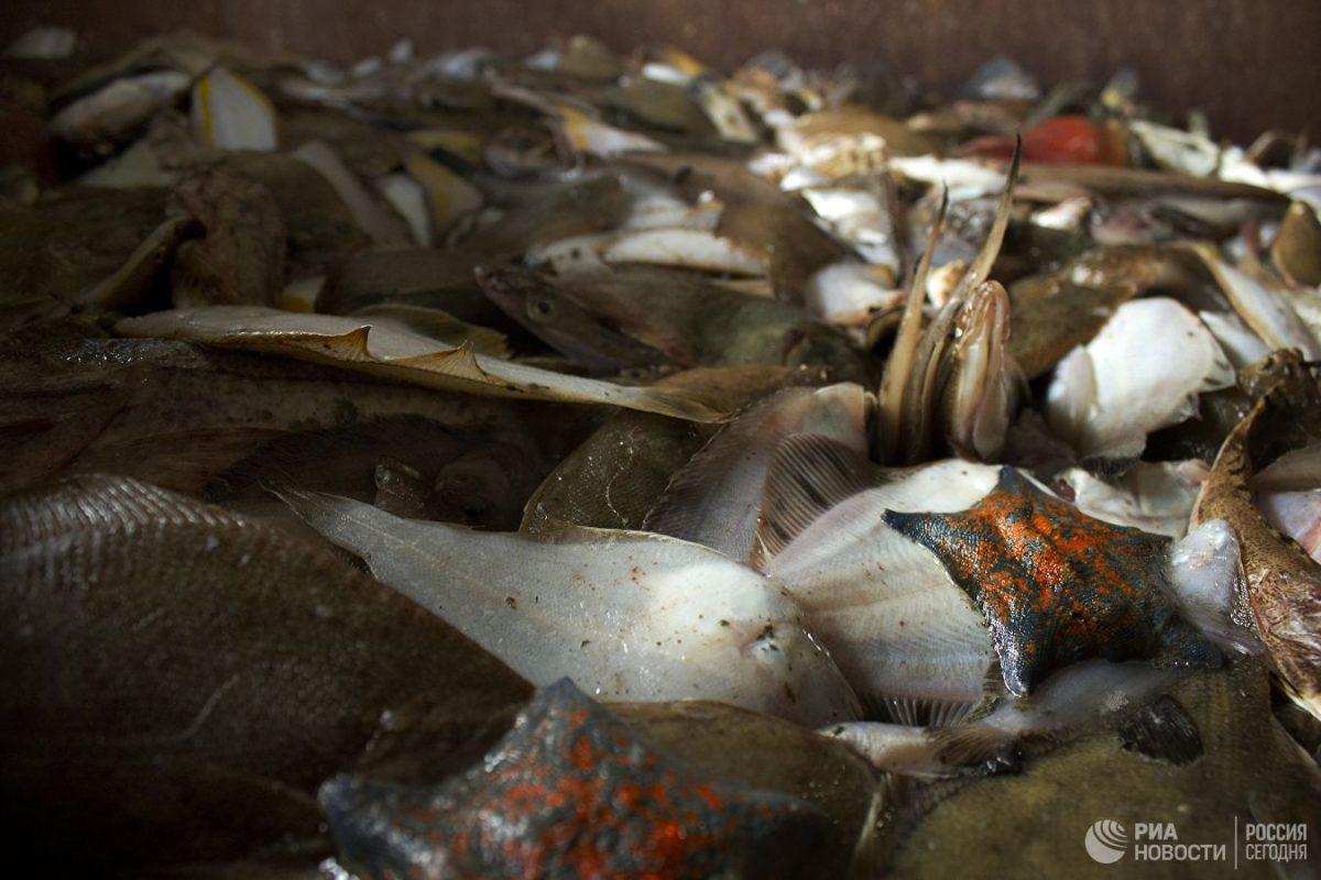 Японская газета рассказала о возрождении рыбной отрасли в России