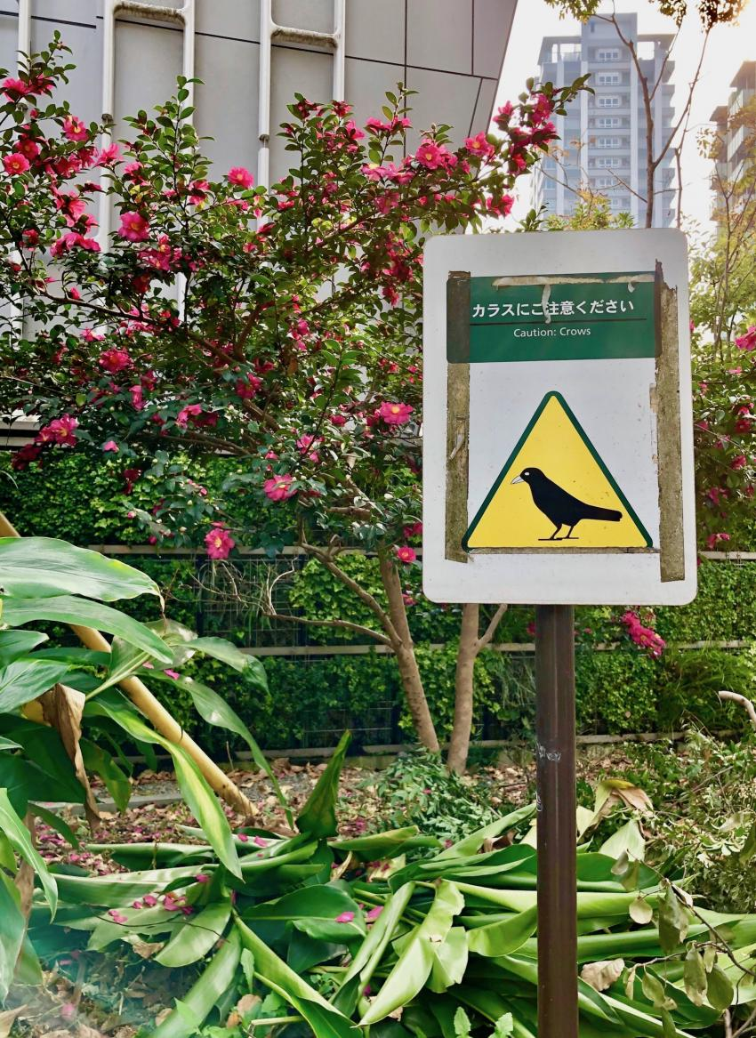 Осторожно, вороны!
