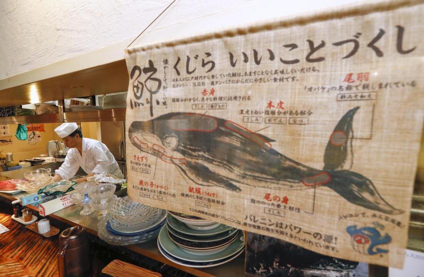 Эксперт: морская фауна России не пострадает от коммерческого вылова китов Японией