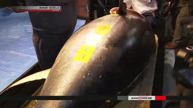 На новогоднем рыбном аукционе тунец побил рекорд стоимости