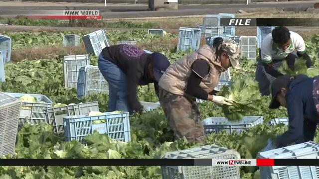 Численность иностранных рабочих в Японии достигла рекордно высокого уровня