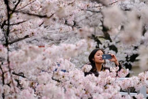 В Токио частично закрыли три главных парка с цветущей сакурой
