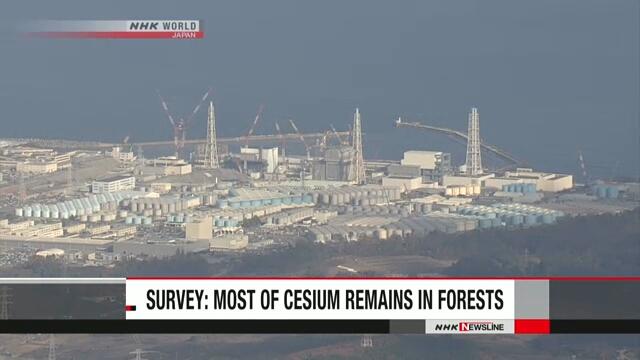 В лесах вокруг аварийной АЭС «Фукусима дай-ити» содержится большая часть цезия