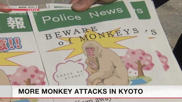 В Киото обезьяны нападают на туристов