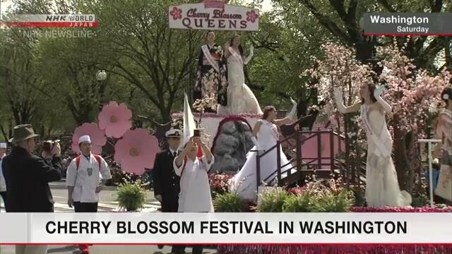 В Вашингтоне проходит Национальный фестиваль цветения сакуры