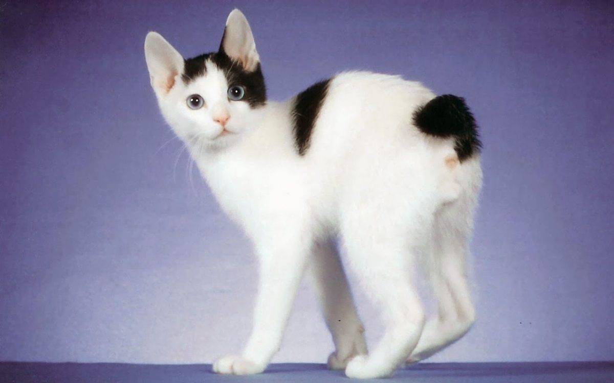 Лекция А.Н. Мещерякова «О чем мяукают японские кошки?»