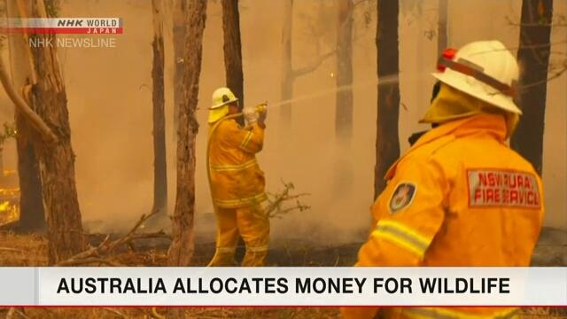 Япония готовится оказать помощь Австралии в борьбе с лесными пожарами