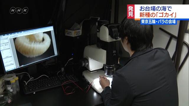 На месте будущего проведения состязаний Олимпийских игр в Токио ученые открыли новый вид морского червя